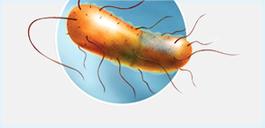 BacT/ALERT: Rare Organism Club